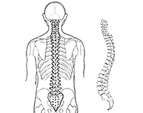 Backbone (PSF) (no labels) thumb.png